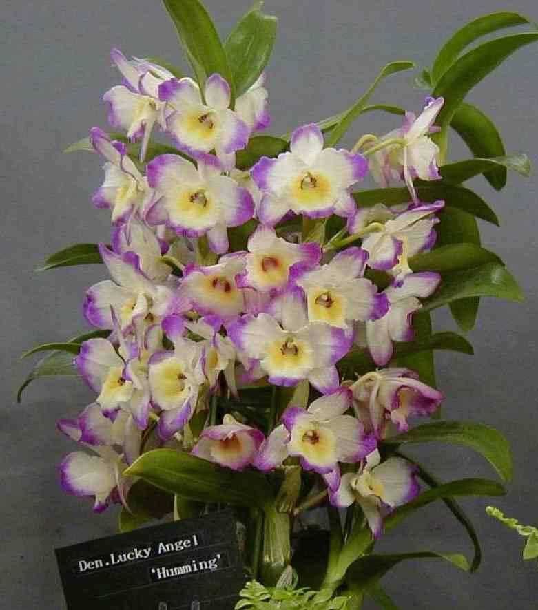 Цветы комнатные цветущие фото название